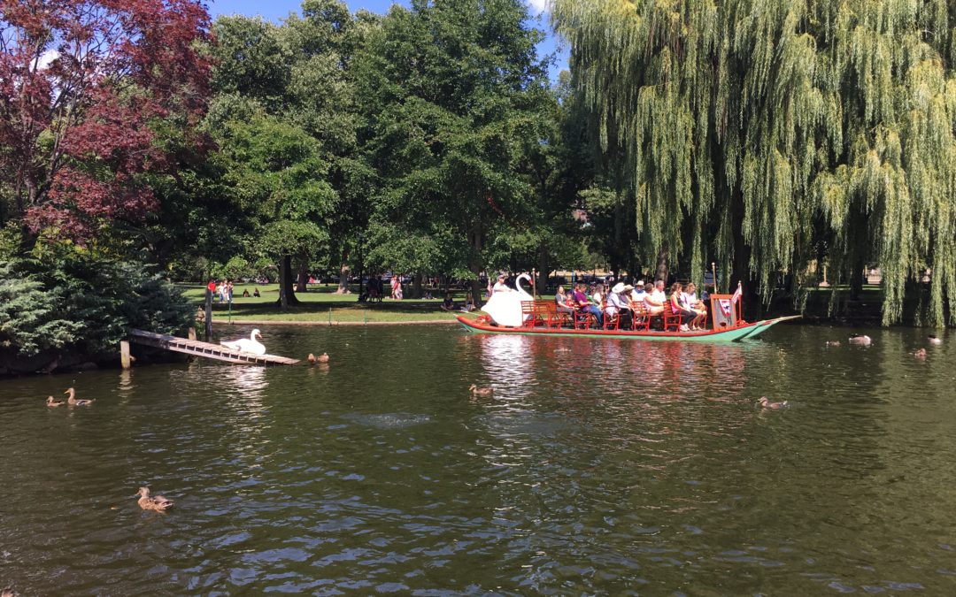 Take A Boston Swan Boat Ride!